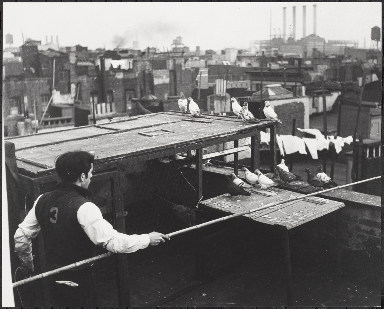 Roy Perry. Raising Pigeons on Rooftops, Lower East Side, ca 1940. Museum of the City of New York 80.102.144