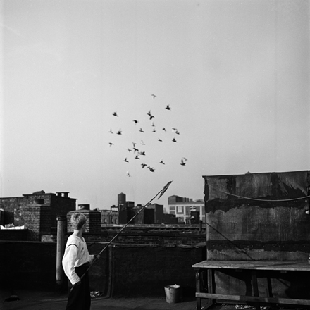 Stanley Kubrick. Shoe Shine Boy [Mickey at a rooftop pigeon coop.], 1947. Museum of the City of New York. X2011.4.10368.305