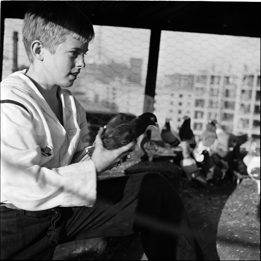Stanley Kubrick. Shoe Shine Boy [Mickey with pigeons.], 1947. Museum of the City of New York. X2011.4.10368.374