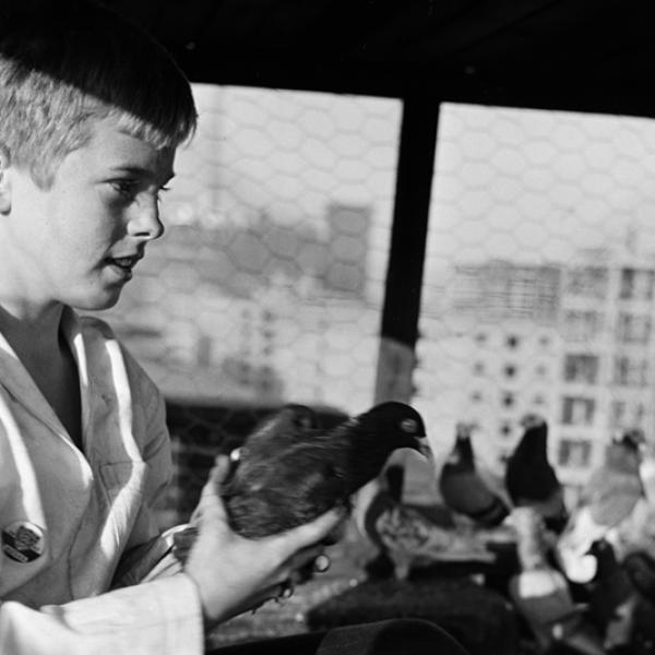 Stanley Kubrick. Shoe Shine Boy [Mickey com pombos.], 1947. Museu da cidade de Nova York. X2011.4.10368.374